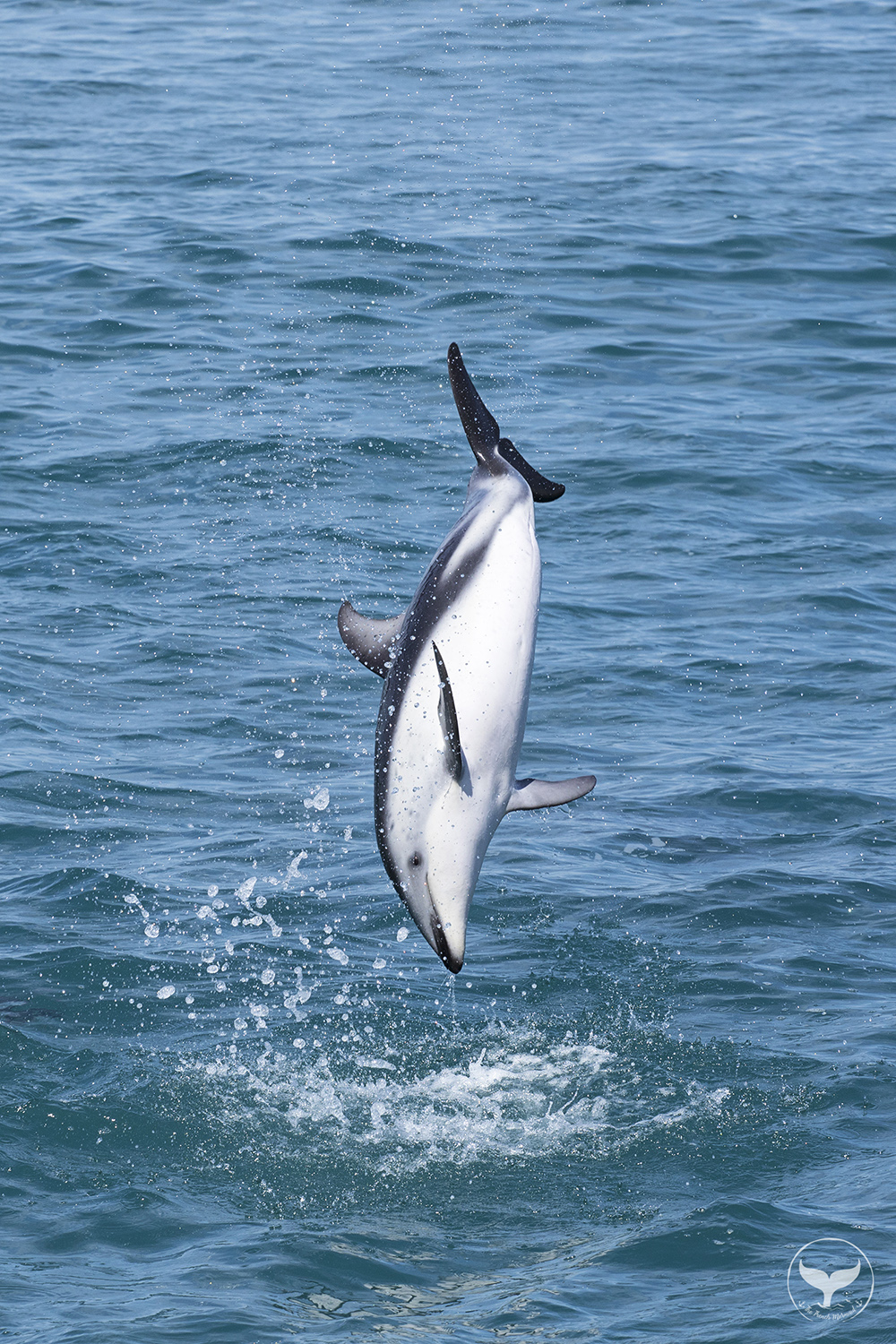 Dolphin Watching in New Zealand