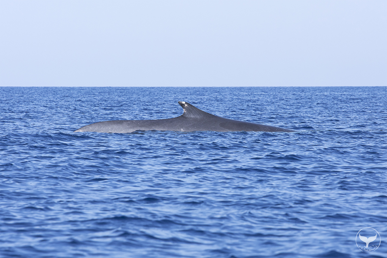 Whale Watching in France